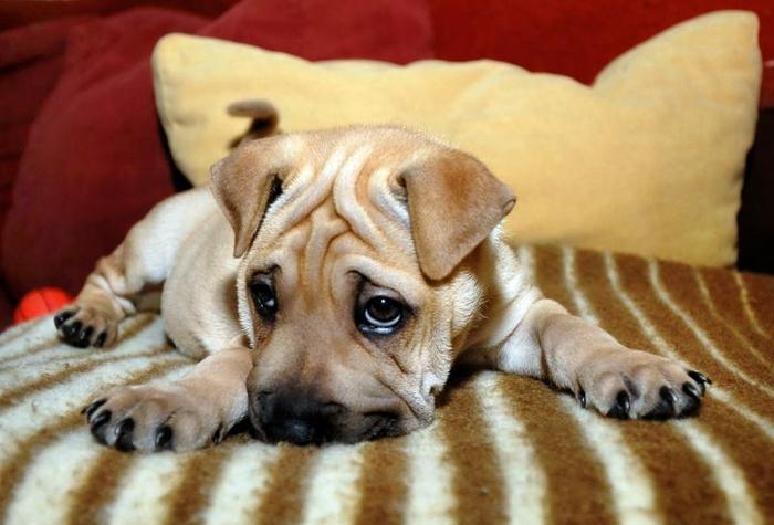 особенные формы смешные фото виноватых собак кстати