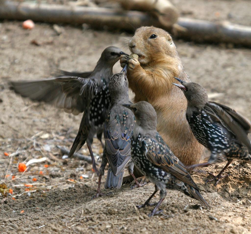 Прикольные фото с птицами